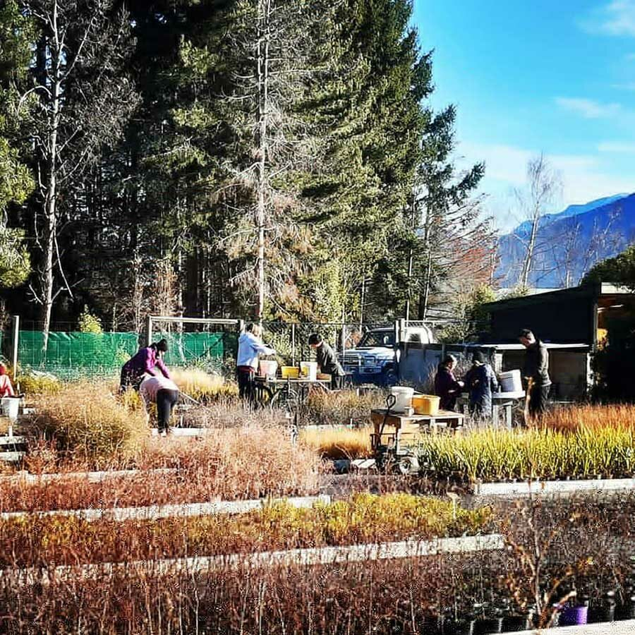 A big shout out to the Wakatipu Reforestation Trust